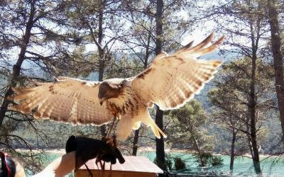 Aves del Parque Cinegético Collado del Almendral